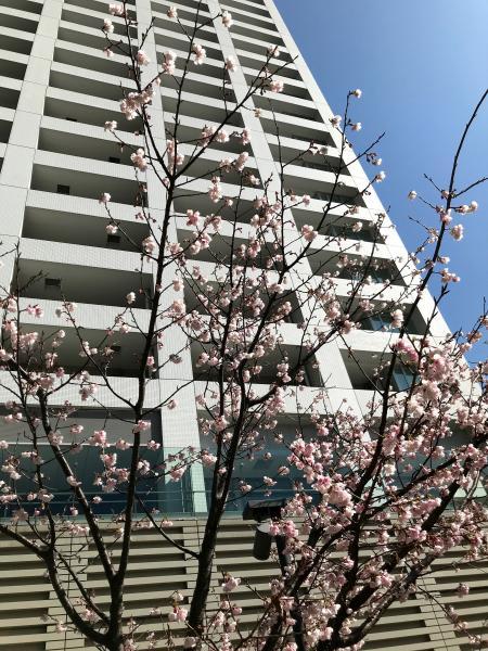 ルサンク大崎ウィズタワーの外観画像