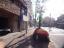 フェニックス高円寺弐番館のその他(外観、エントランス、前面の通り等)